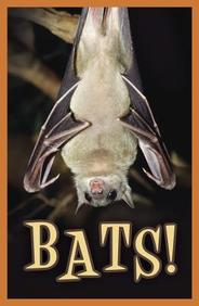 Bats! : 25- Pack Tracts