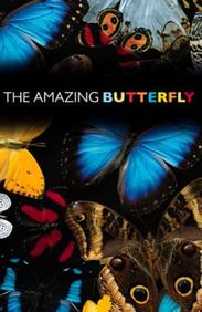 The Amazing Butterfly