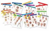 Netter Anatomy Charts: Complete Set Of 20 Charts (Netter Charts)