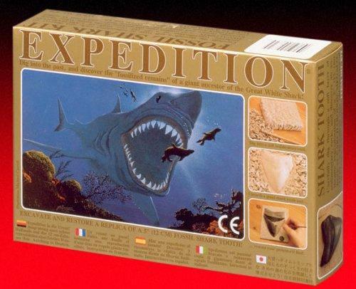 Kristal Expedition! Medium Megalodon Shark Tooth