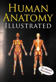 Illustrated Human Anatomy