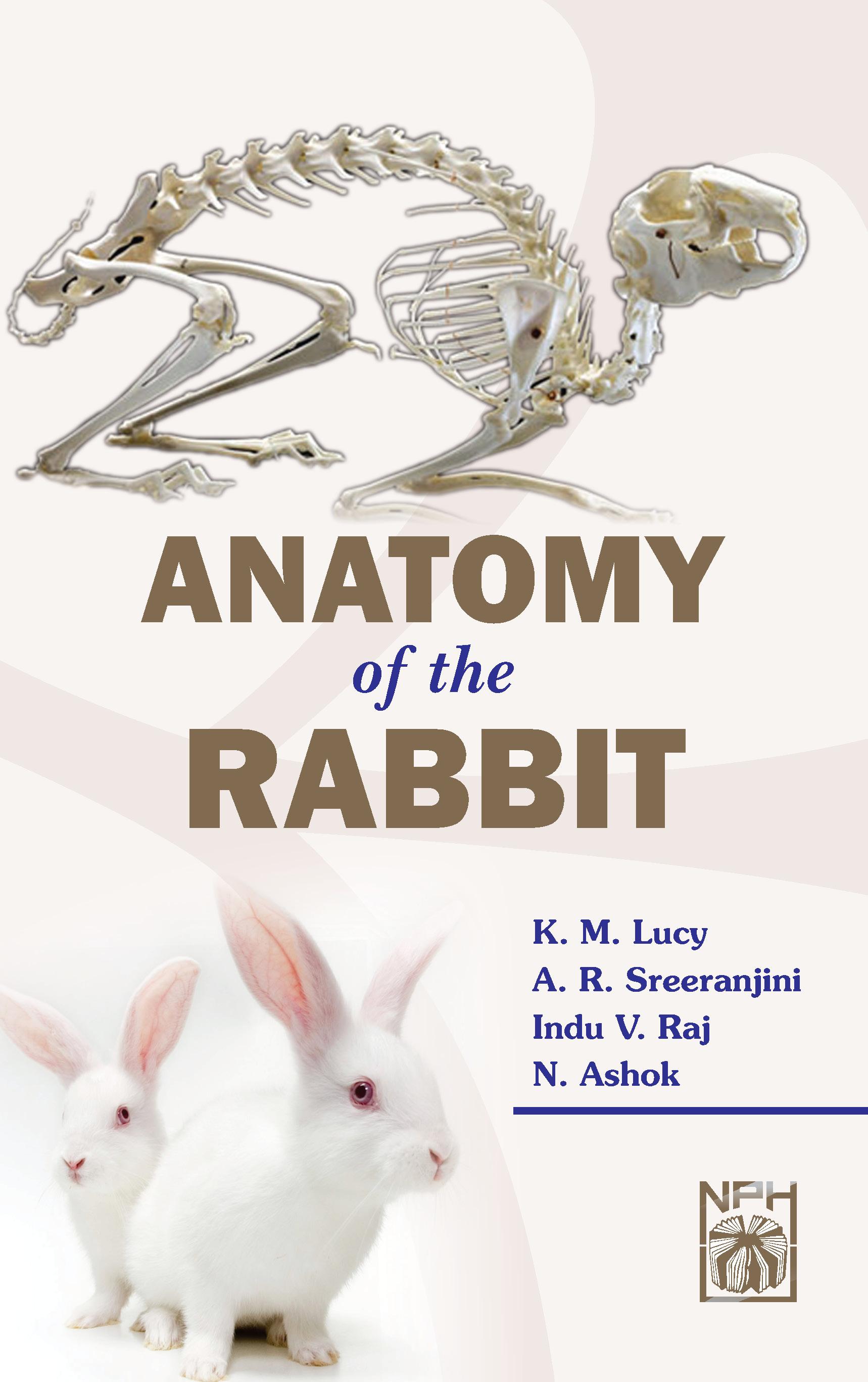 Buy Anatomy Of The Rabbit book : Km Lucy,Ar Sreeranjini,Indu V Raj ...